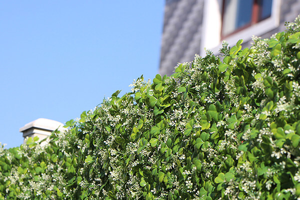 New Recommendations of Ourdoor Artificial Hedges in 2021