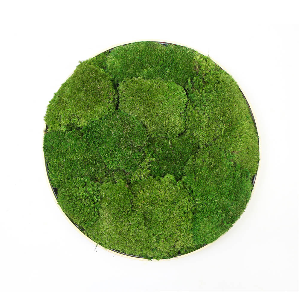 Moss Wall Frame